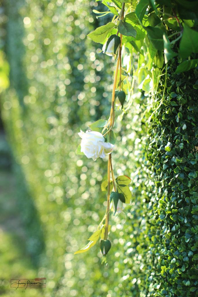 Ścianka bukszpanowa Funny Flower